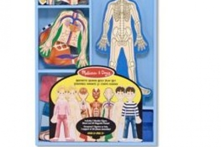 Magnetic Human Body Play Set  picture 1693