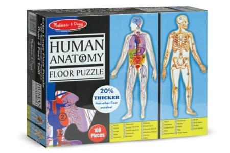 Human Anatomy picture 1660